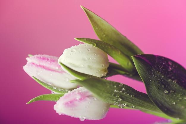 Cerca de tulipanes de primavera fresca