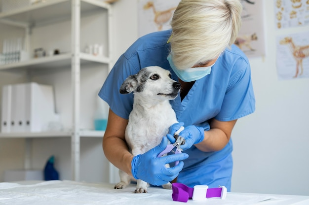 Cerca de veterinario cuidando perro