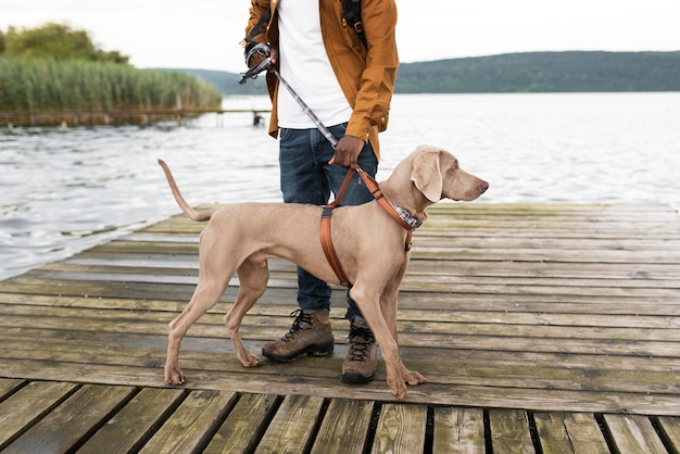 Cerca de viajero y lindo perro con correa