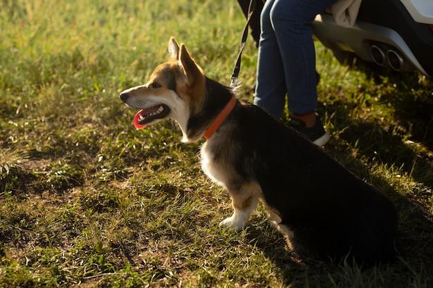 Cerca de viajero con lindo perro