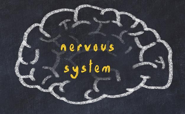 Cerebro con inscripción sistema nervioso