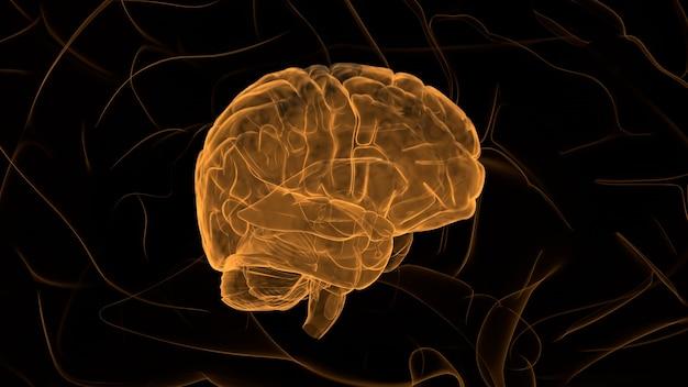Cerebro naranja
