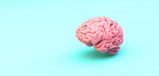 Cerebro rosa sobre azul