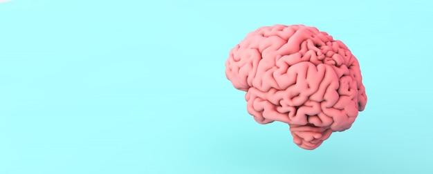 Cerebro rosa