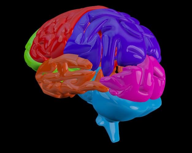 Cerebro con secciones destacadas
