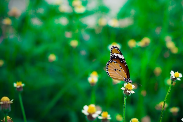 Cerrado mariposa alimentándose de hierba flor