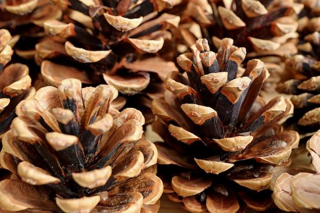 Cerrado el montón de conos de pino seco natural con enfoque selectivo para el fondo