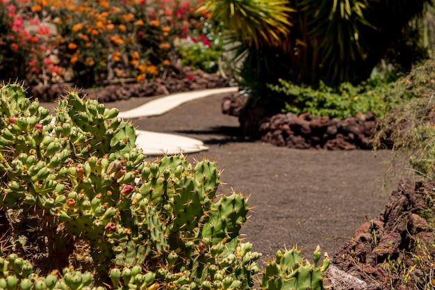 Cerrar cactus con fondo borroso