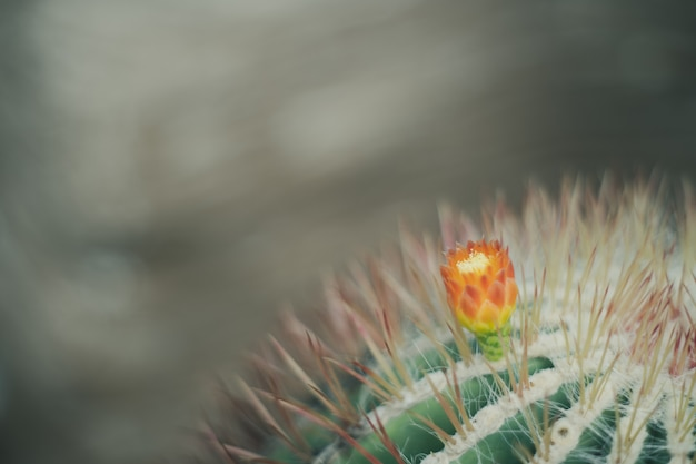 Cerrar cactus fondo de estilo retro vintage