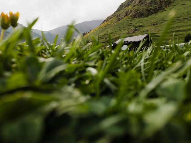 Cerrar detalles del campo de hierba
