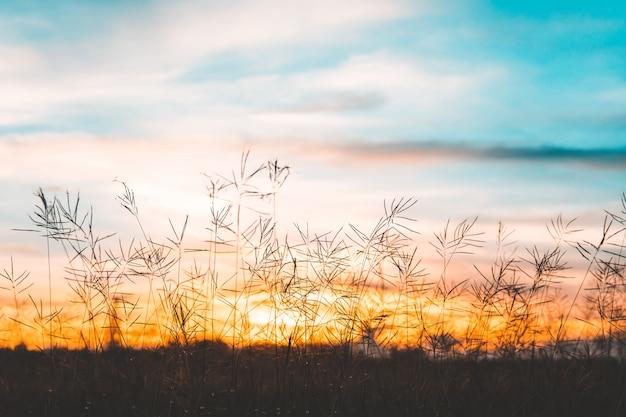 Cerrar flor blanca en campo con fondo de amanecer