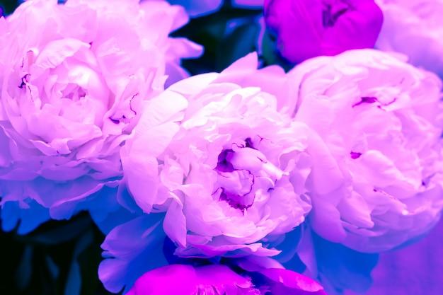 Cerrar flores de peonía arte neón de moda tonos