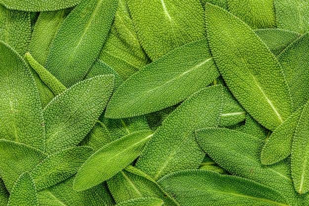 Cerrar un fondo de textura abstracta de hoja de salvia hierba