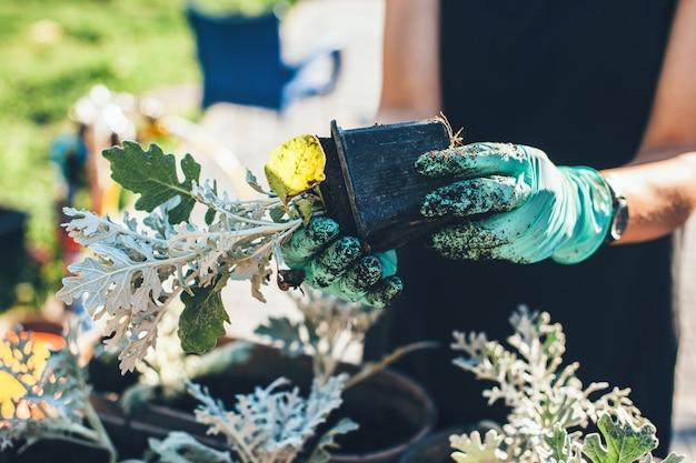 Cerrar foto de una mujer caucásica con guantes macetas de flores mientras trabaja en el jardín en casa