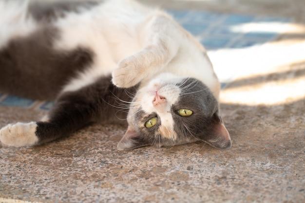 Cerrar gato atigrado gris permanecer en el piso