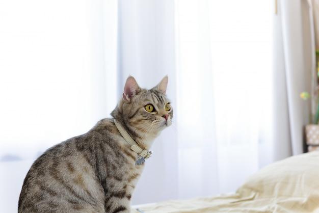 Cerrar hermosos ojos amarillos de gatito en dormitorio blanco