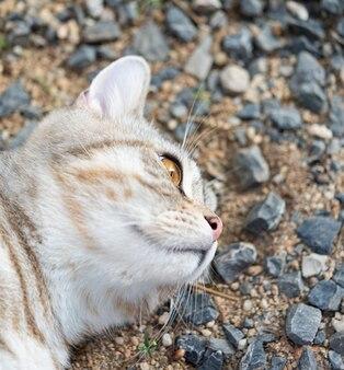 Cerrar hermosos ojos amarillos de gatito