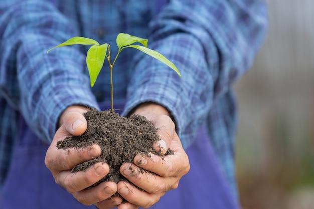 Cerrar imagen de la mano del jardinero sosteniendo el árbol joven de la planta