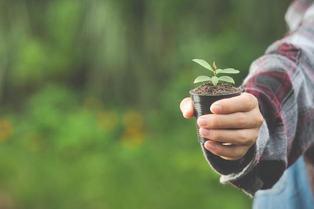 Cerrar imagen de planta de mano