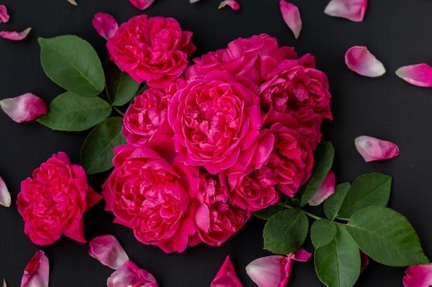Cerrar imagen de rosas rosadas sobre fondo negro