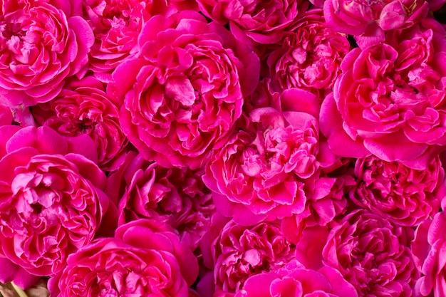 Cerrar imagen de rosas rosadas