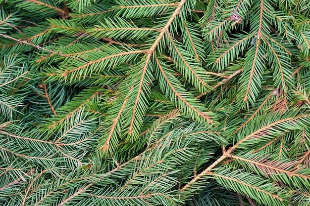Cerrar imagen de vista superior de iluminado por el sol denso pino verde fresco natural