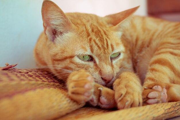 Cerrar lindo gato atigrado jengibre permanecer en estera de paja se centran en el ojo