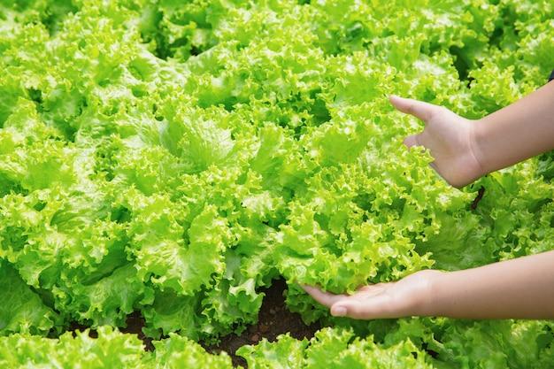 Cerrar mano agricultor en el jardín durante el fondo de alimentos de tiempo de mañana