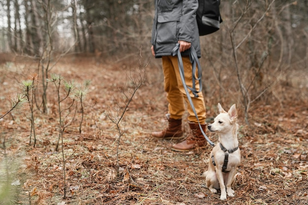 Cerrar mano sujetando la correa del perro