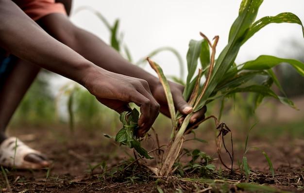 Cerrar manos sosteniendo plantas