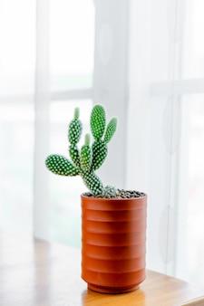 Cerrar opuntia microdasys albispina cactus en maceta de cerámica en la mesa