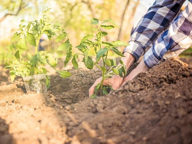 Cerrar persona plantando plantas pequeñas en sol