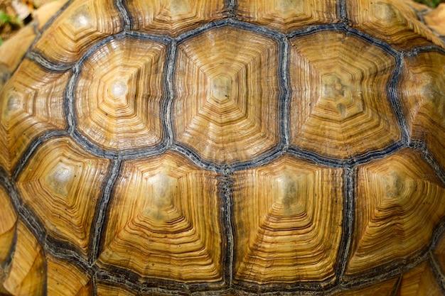Cerrar la piel de tortuga sulcata para pieles de animales