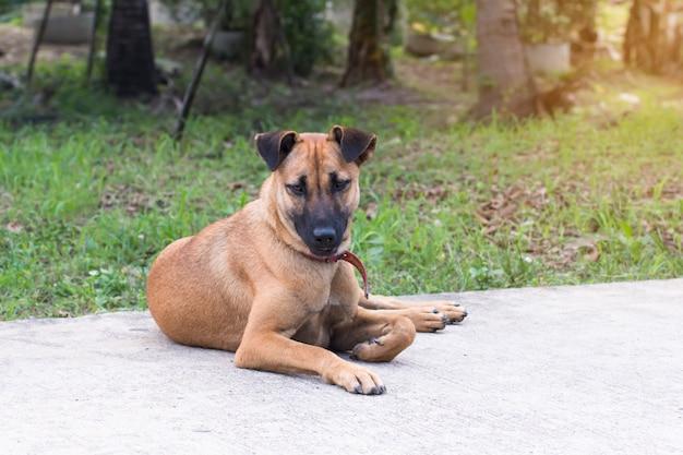 Cerrar el retrato de un perro callejero en la acera, perro vagabundo