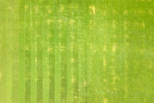 Cerrar vista aérea de la superficie de la hierba verde recién cortada en el estadio de fútbol en verano.