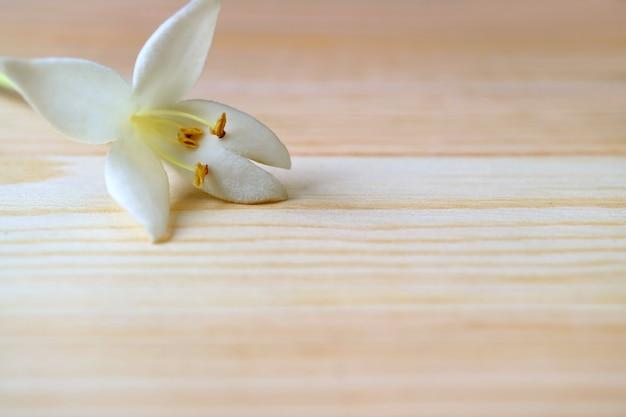 Cerró una hermosa flor blanca de millingtonia en la mesa de madera marrón claro