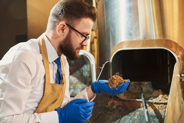 Cervecero experto en guantes de goma con granos de malta molidos