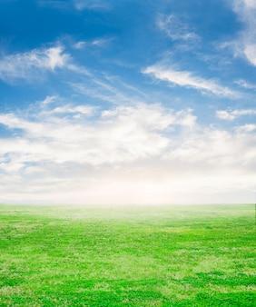 Césped fresco con el cielo de fondo