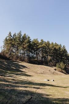 Césped verde cerca del bosque de pinos
