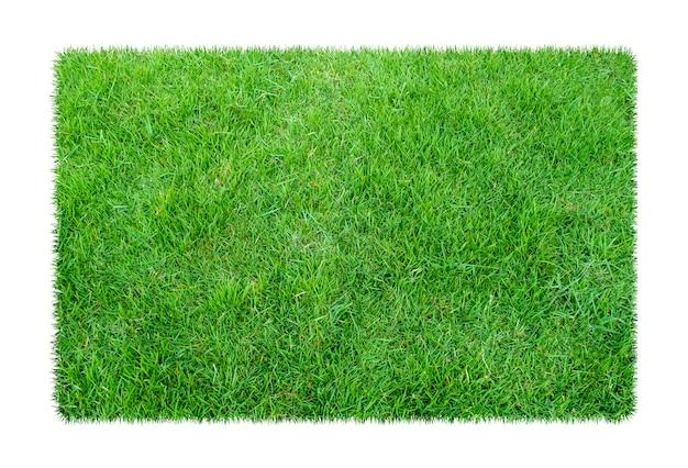 Césped verde. fondo de textura natural. primavera fresca hierba verde
