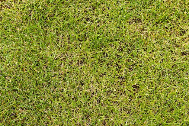 Césped verde inclinado, primer plano superior.