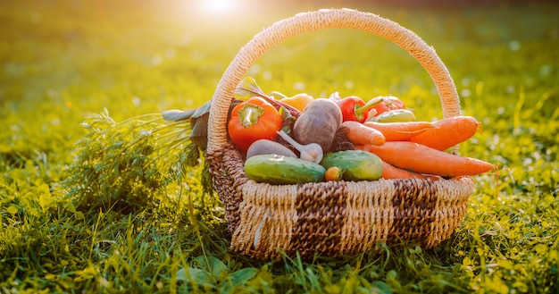 Cesta llena de verduras ecológicas frescas en el césped al atardecer
