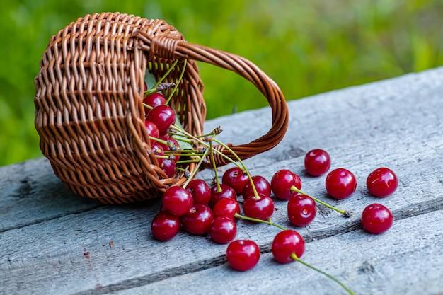 Cesta de mimbre llena de rojo cereza madura en mesa de madera del jardín.