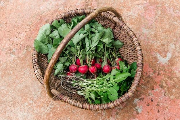 Cesta de mimbre con rábano y hierbas. cosecha en la finca, en el jardín. vista superior