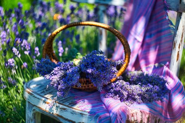 Cesta con ramo de lavanda en silla vintage, sobre fondo de campo de lavanda