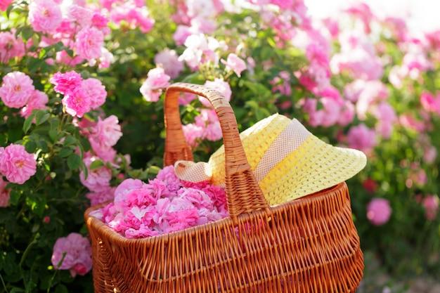 Cesto con flor de rosas rosas de aceite.