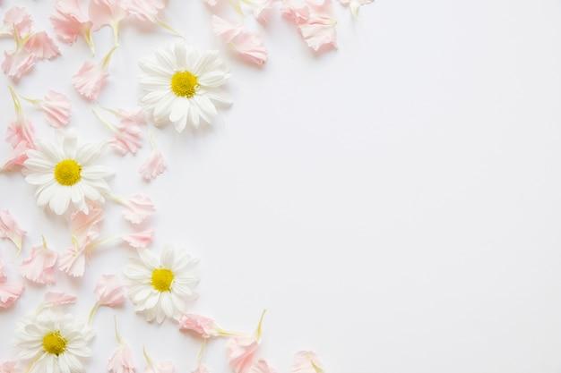 Chamomiles y pétalos de rosa