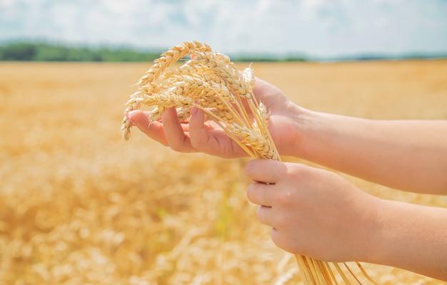 Chica espiguillas de trigo en las manos.