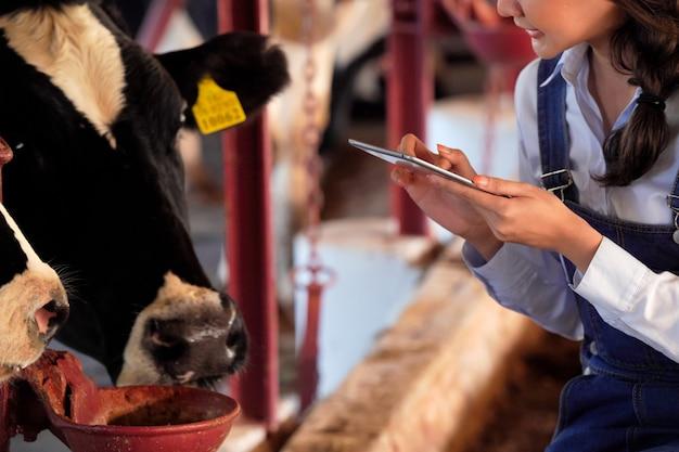 Chica granjera está usando una computadora portátil para monitorear y monitorear la salud de las vacas lecheras en su granja lechera, concepto de tecnología