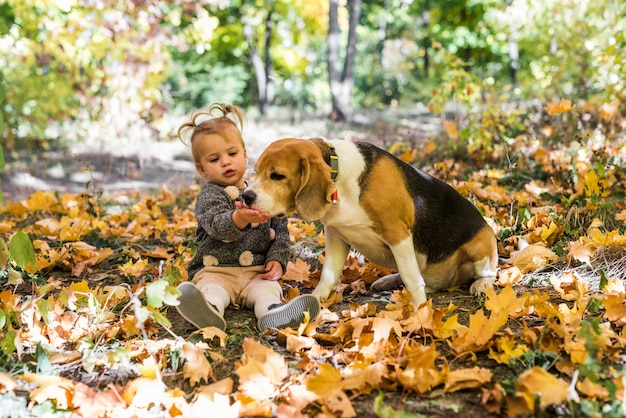 Chica jugando con perro beagle sentado en hojas de arce en el bosque